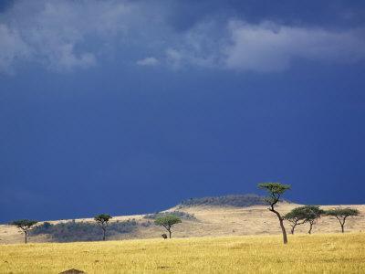 Grass plains and storm clouds over Serengeti, Serengeti National Park, Tanzania
