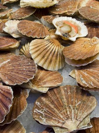 Display of Fresh Scallops, Venice, Italy