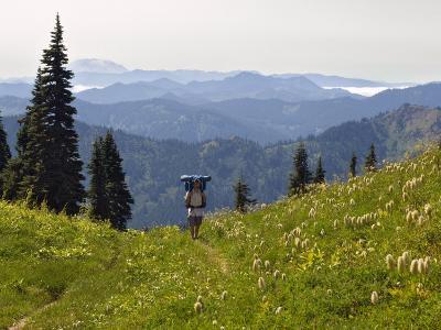 Lone backpacker and wildflowers, Tatoosh Wilderness, Washington Cascades, USA