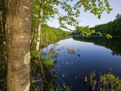 Boulter Pond at Highland Farm, York, Maine