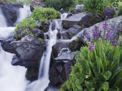 Mountain Stream and Wildflowers, Ouray, San Juan Mountains, Rocky Mountains, Colorado, USA