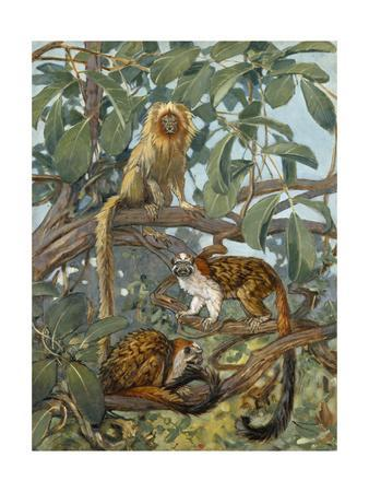 Painting of Marmosets in the Jungle Canopy