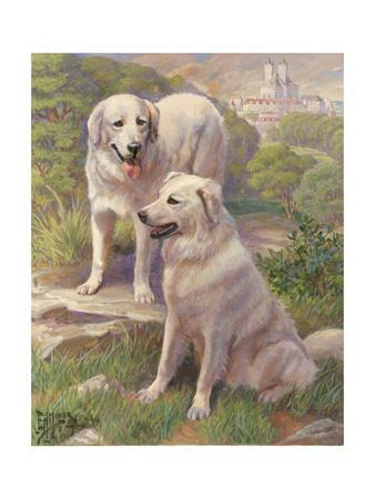 Kuvasz Dogs are Used as Watchdogs