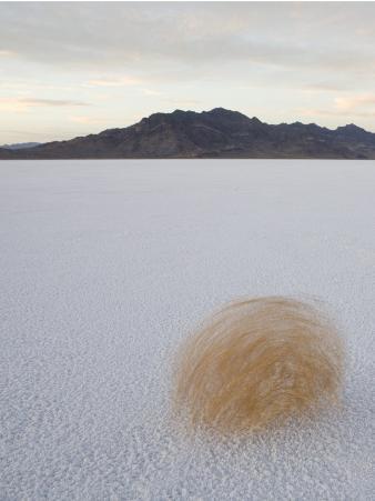 Tumbleweed Spinning over the Bonneville Salt Flats, Utah