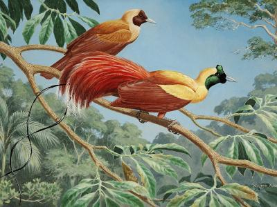 Male and Female Red Birds of Paradise Perch on a Tree Branch