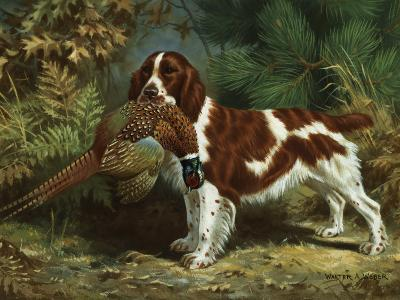 Welsh Springer Spaniel Holds a Dead Bird in its Mouth