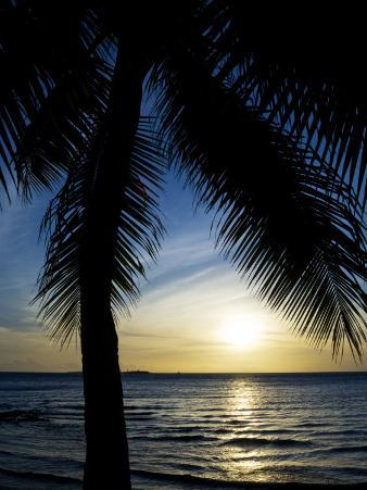 Silhouetted Palm Tree and Gentle Surf at Twilight