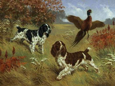 Energetic English Springer Spaniels Flush a Bird from its Cover
