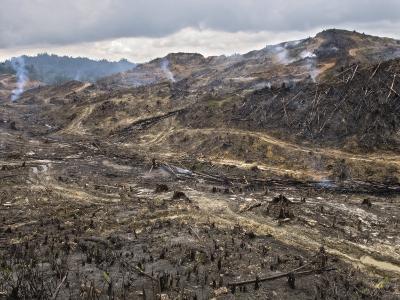 Logging and Slash-And-Burn Agriculture Level Borneo's Rainforest
