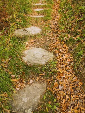Stone Path Through Woods Lined with Fallen Autumn Leaves, Vermont