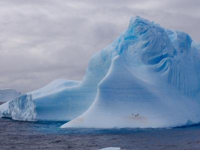 Chinstrap Penguins Resting on a Large Tabular Iceberg