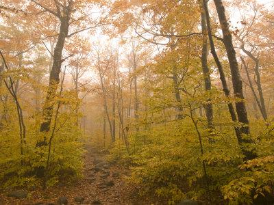 Beautiful Fall Scene in Acadia National Park