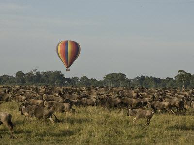 Hot Air Balloon over a Herd of Wildebeest in Masai Mara