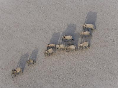 Herd of Elephants Cast Shadow as They March in a Desert