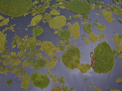 Vegetation Floating on Lake Wamala and Reflections of a Cloudy Sky