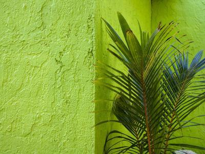 Palm Plant and Green Wall Backdrop