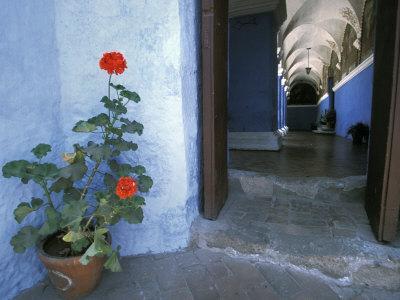 Potted Geranium at the Sprawling Santa Catalina Monastery