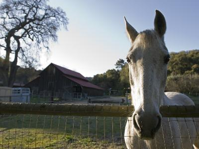 Horse in the Stable at Midland School in Santa Ynez Valley