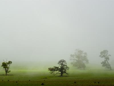 Mist and Fog Engulf a Lime Green Field and Scattered Trees in Winter
