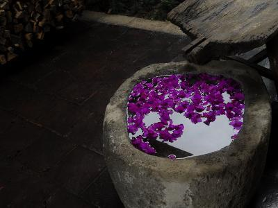 Flower Petals Float on the Surface of Water in an Old Pot