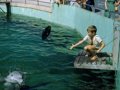 Boy Tosses a Black Inner Tube to a Captive Dolphin