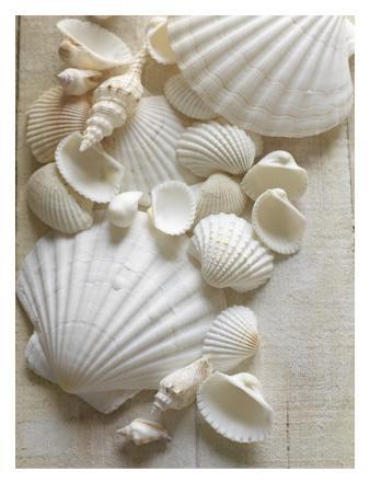 White Sea Shells