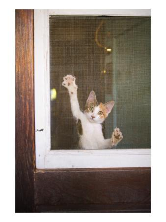 Cat on Screen Door