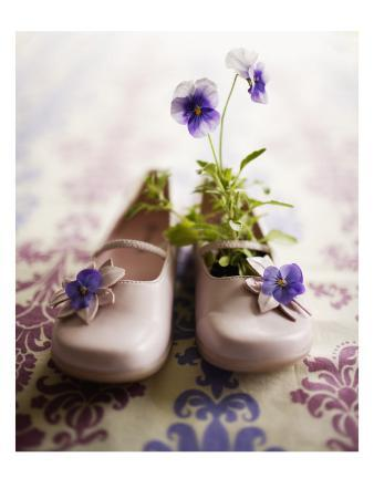 Pansies in Baby Shoes