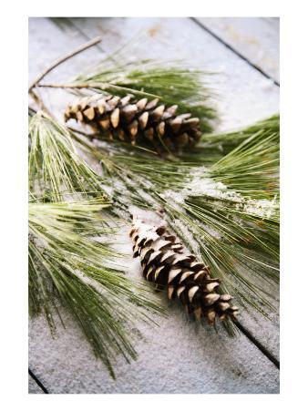 Pine Cone Needles with Wood