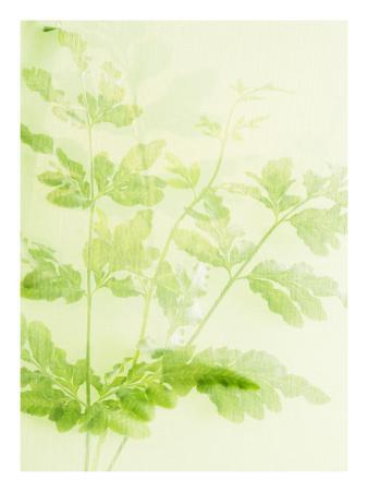 Green Fern Stems