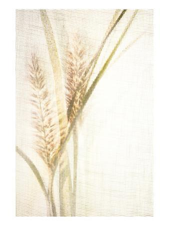 Foxtail Grasses with Sun