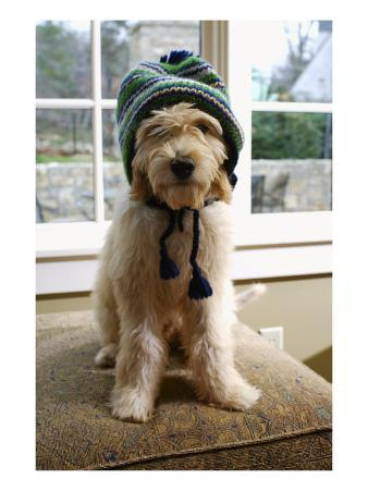 Dog in Knit Hat