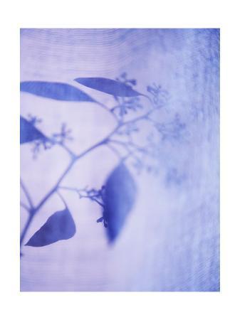Purple Botanical