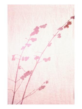Pink Botanical Shadow