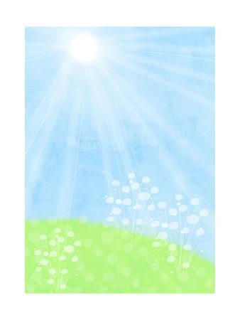 Sun Shining on a Field of Flowers