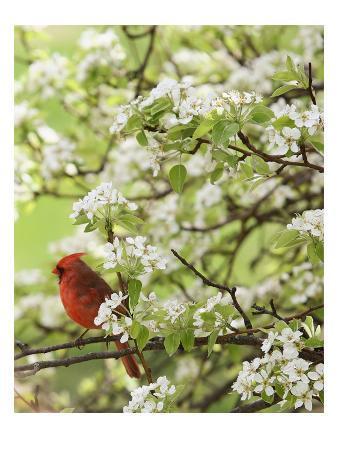 Bird in Blooming Tree