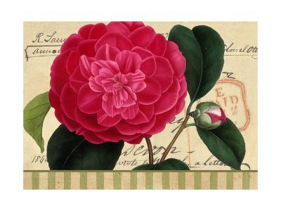 Pink Flower on French Postcard