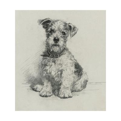 Victorian Terrier