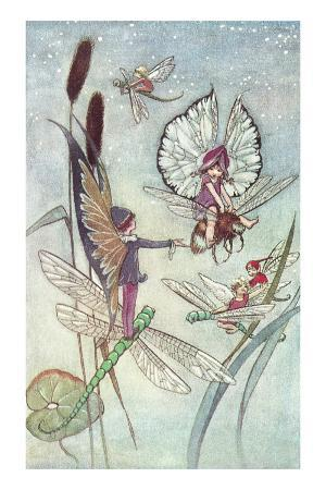 Fairies Riding Insects