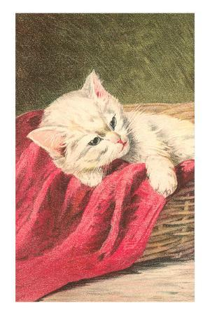 White Kitten with Red Cloth