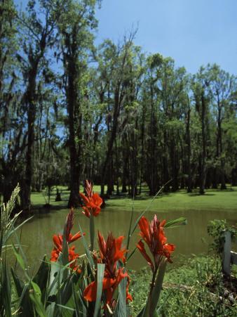 Trees in Swamp, Magnolia Plantation and Gardens, Charleston, Charleston County, South Carolina, USA