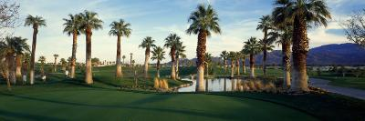 Palm Trees in Golf Course, Desert Springs Golf Course, Palm Springs, Riverside County, California