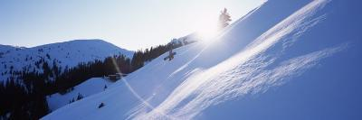 Trees on a Snow Covered Landscape, Kitzbuhel, Westendorf, Tirol, Austria