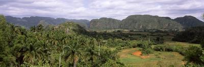 Trees with Mountain Range in Back, Valle De Vinales, Pinar Del Rio Province, Cuba