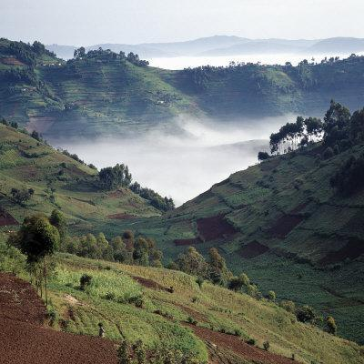 Mist Hugs the Bottom of Valley in Early Morning in Beautiful Hill-Country of Southwest Uganda