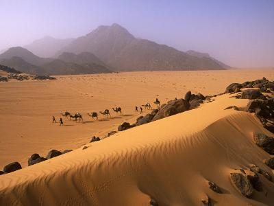 Tenere Desert, Camel Caravan Travelling Through the Air Mountains and Tenere Desert, Niger