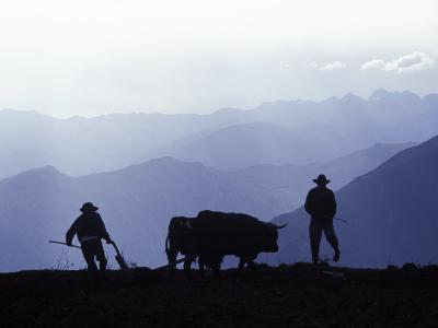 Silhouette of Ploughmen with Oxen, Colca Canyon, Peru