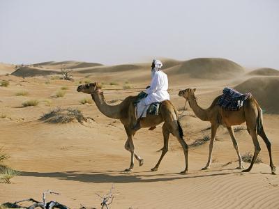 Bedu Rides His Camel Amongst the Sand Dunes in the Desert