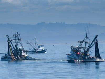 California, Monterey, Fishing Boats, USA