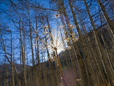 Colorado, Maroon Bells Scenic Area, USA